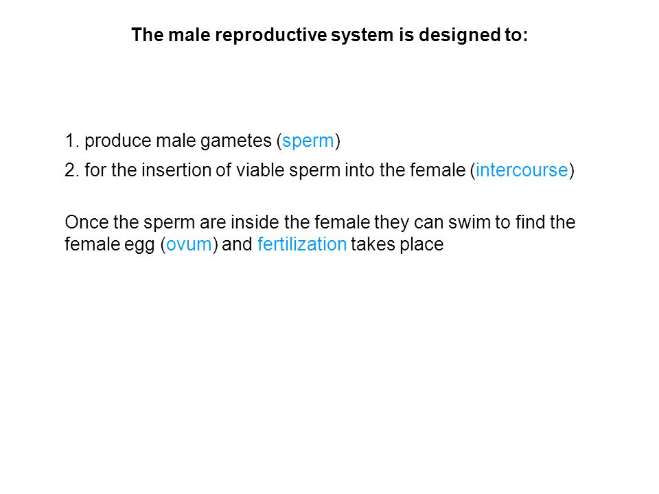 The male reproductive system is designed to: