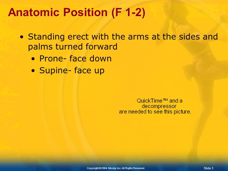 Anatomic Position (F 1-2)