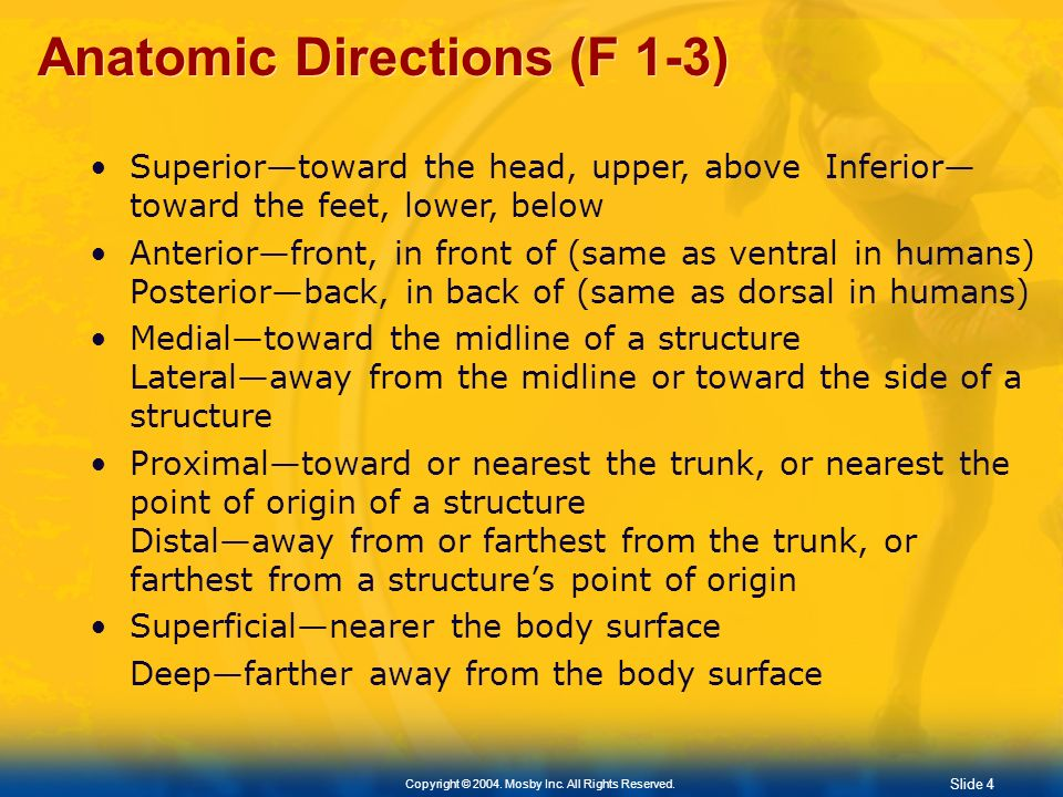 Anatomic Directions (F 1-3)