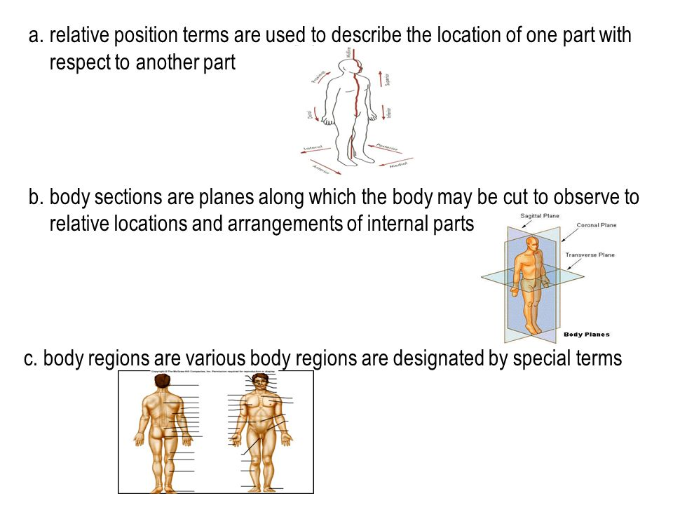 a. relative position terms are used to describe the location of one part with