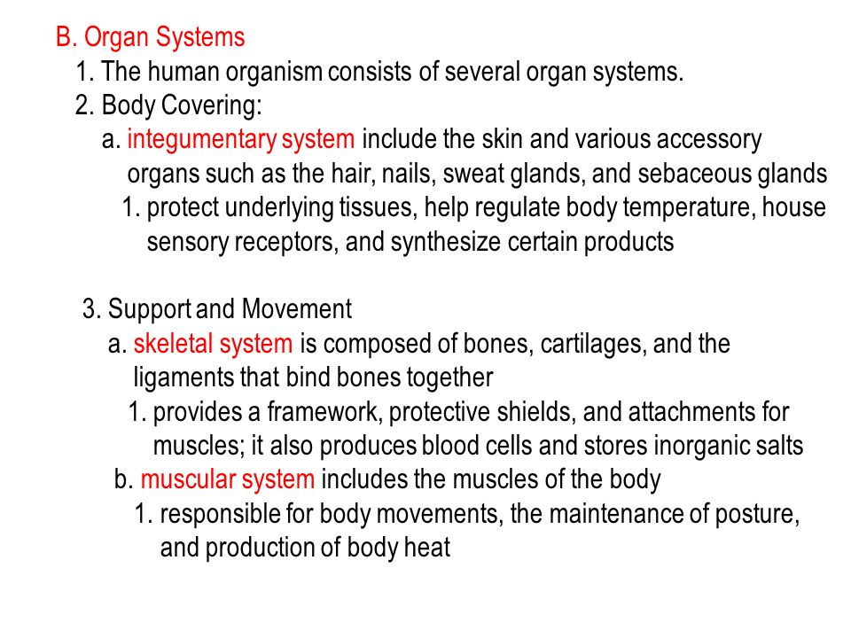 B. Organ Systems 1. The human organism consists of several organ systems. 2. Body Covering: