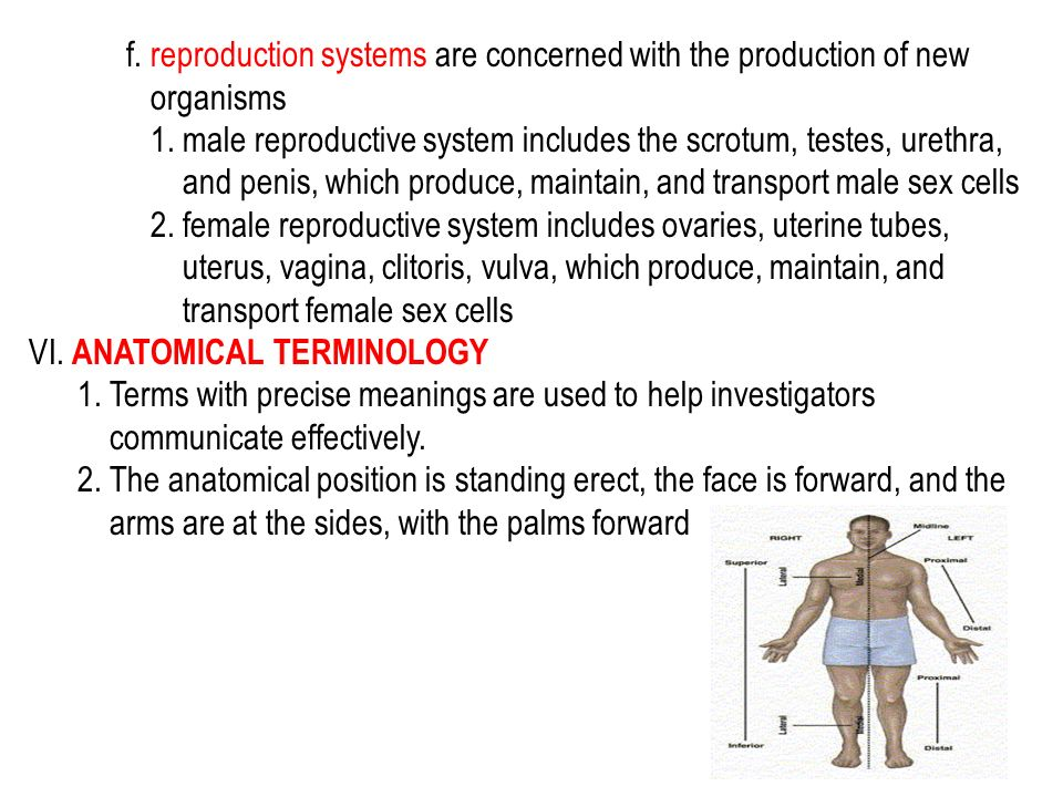 f. reproduction systems are concerned with the production of new