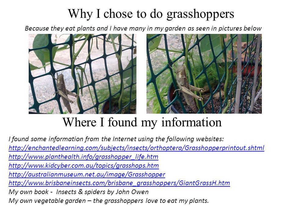 Why I chose to do grasshoppers