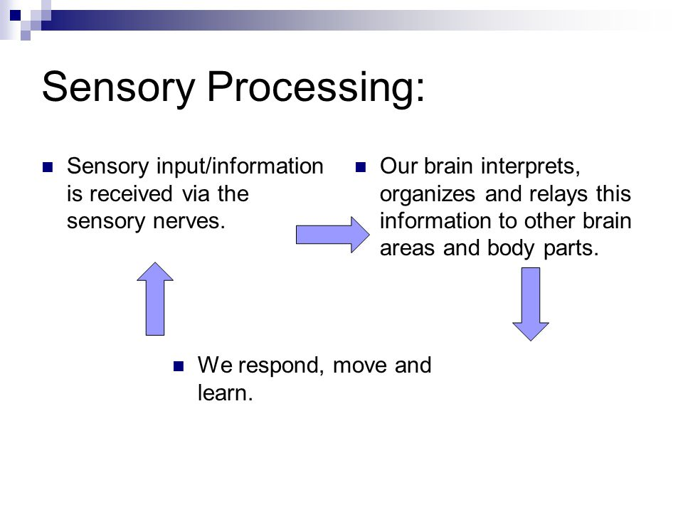 Sensory Processing: Sensory input/information is received via the sensory nerves.