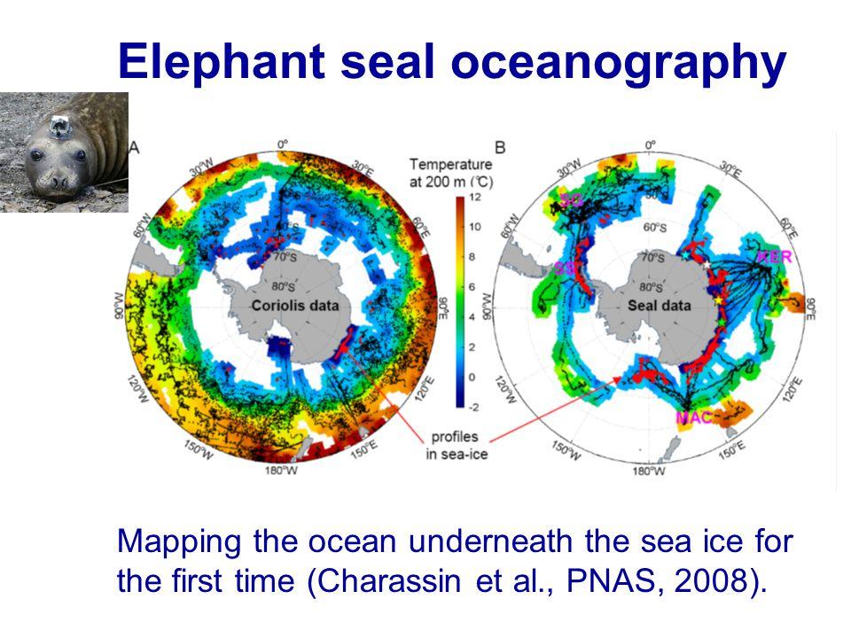 Elephant seal oceanography