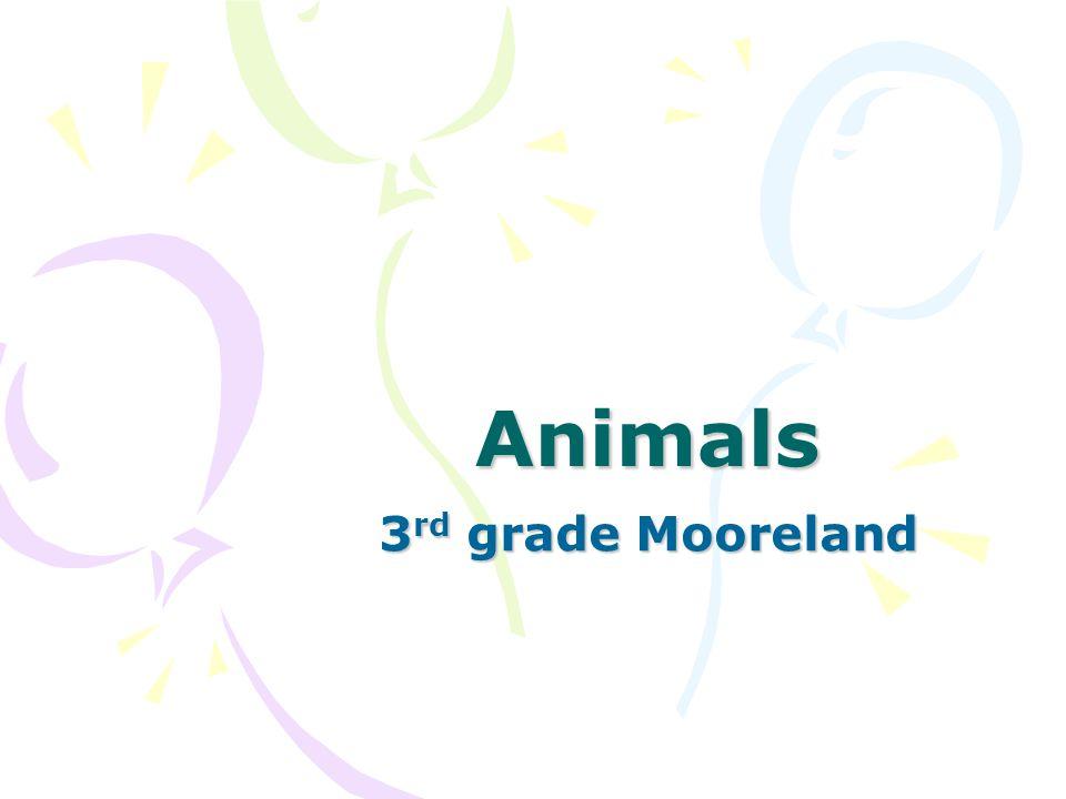 Animals 3rd grade Mooreland