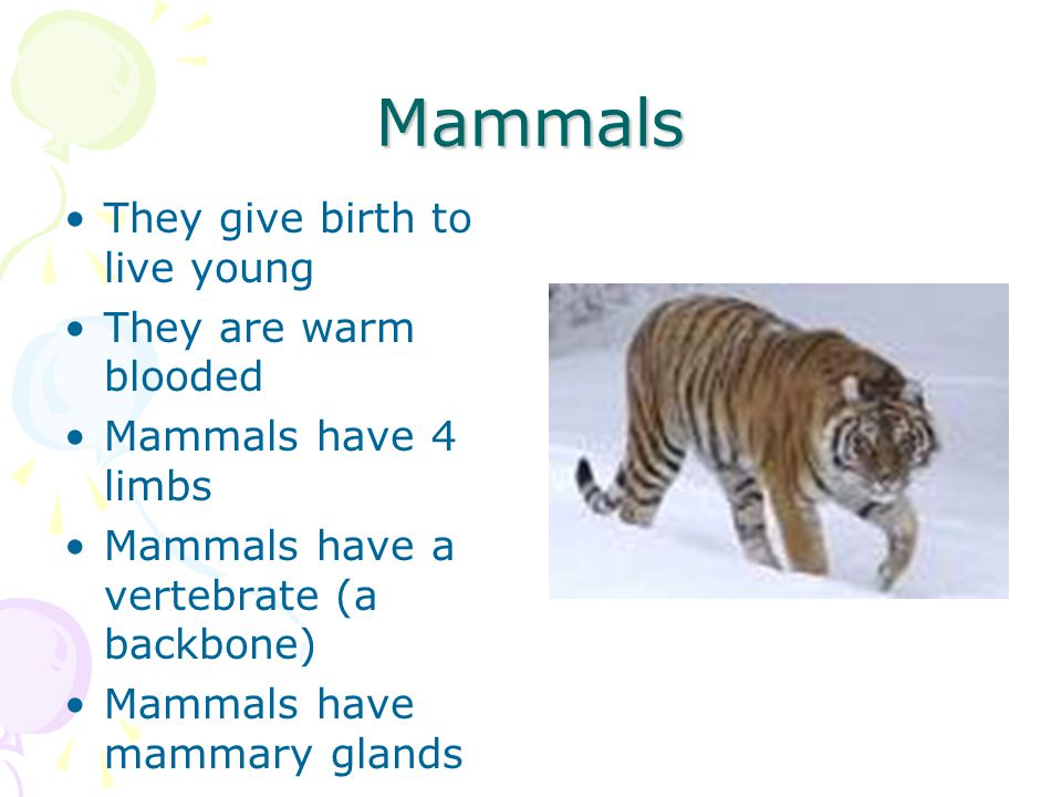 Mammals They give birth to live young They are warm blooded