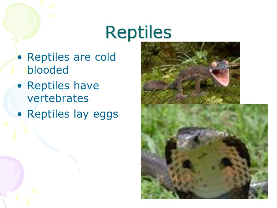 Reptiles Reptiles are cold blooded Reptiles have vertebrates