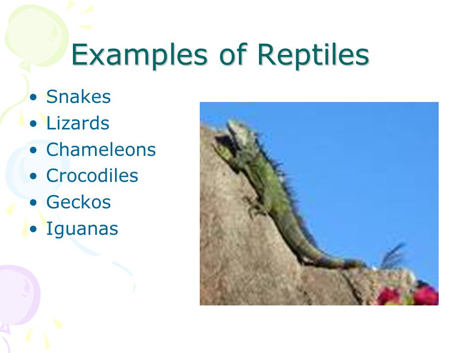 Examples of Reptiles Snakes Lizards Chameleons Crocodiles Geckos