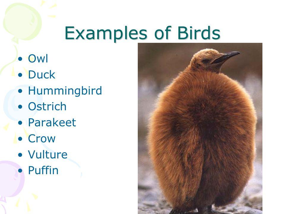 Examples of Birds Owl Duck Hummingbird Ostrich Parakeet Crow Vulture