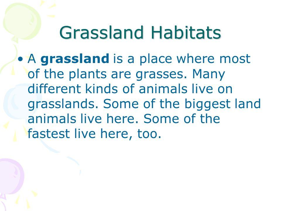 Grassland Habitats