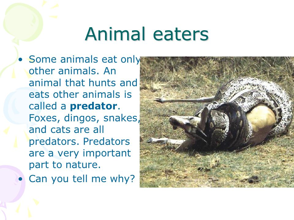 Animal eaters