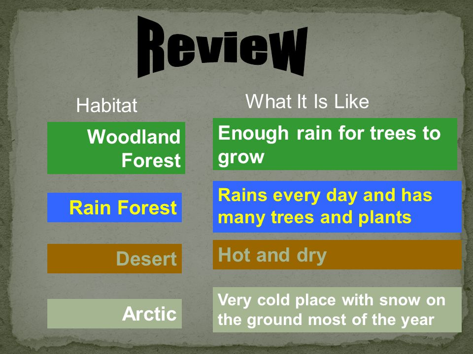 Review What It Is Like Habitat Enough rain for trees to grow