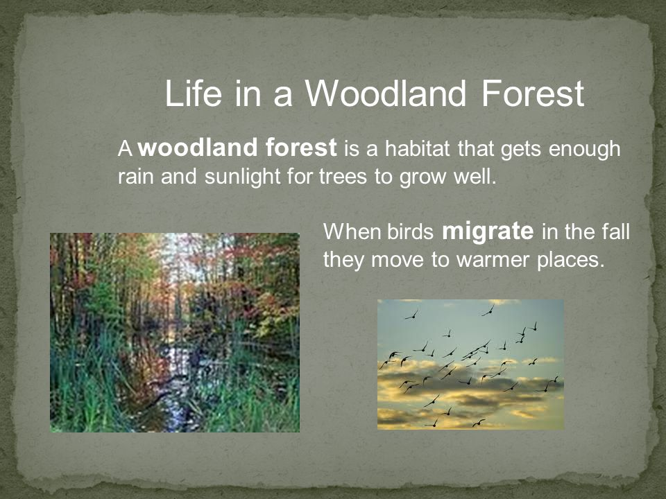 Life in a Woodland Forest