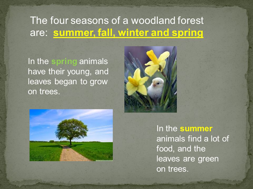 The four seasons of a woodland forest are: summer, fall, winter and spring