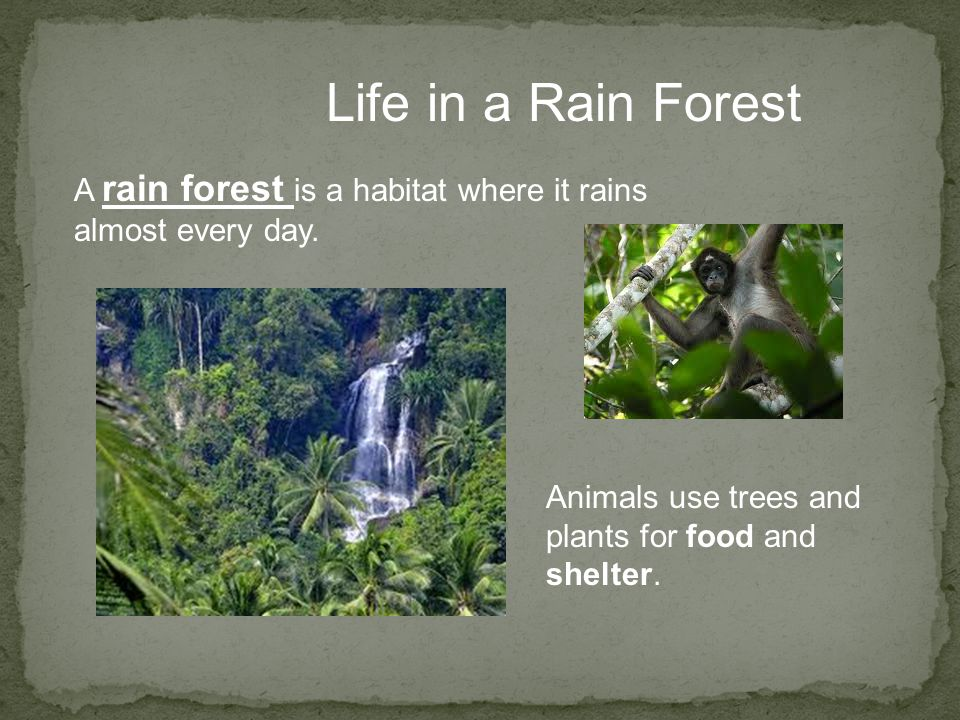 Life in a Rain Forest A rain forest is a habitat where it rains almost every day.