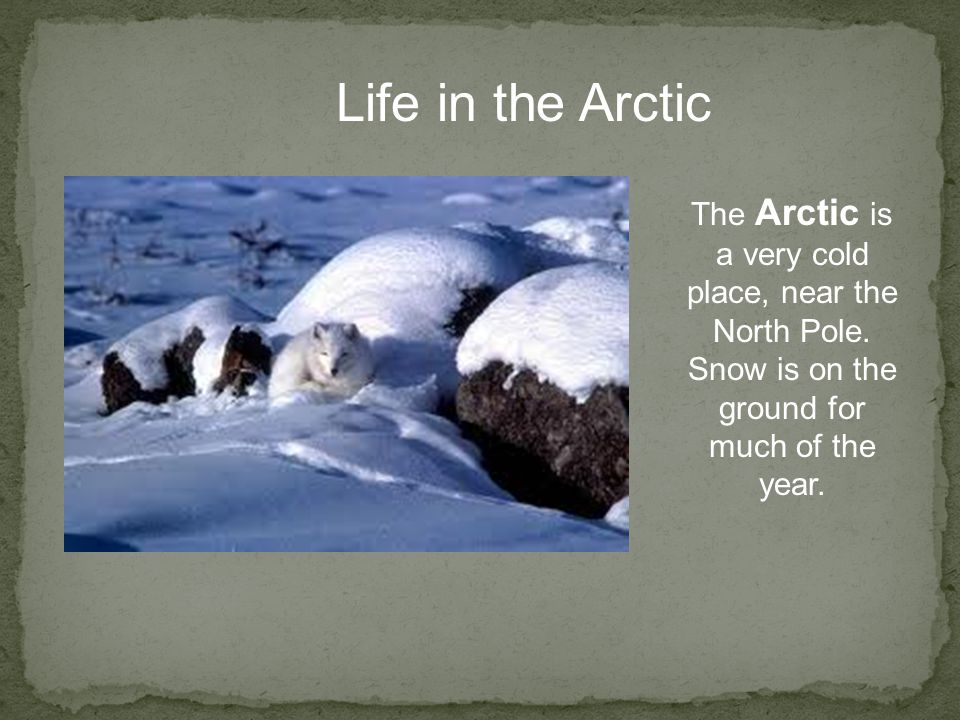 Life in the Arctic The Arctic is a very cold place, near the North Pole.