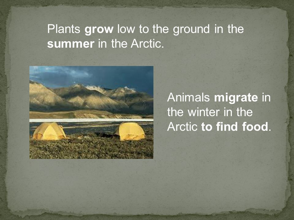 Plants grow low to the ground in the summer in the Arctic.
