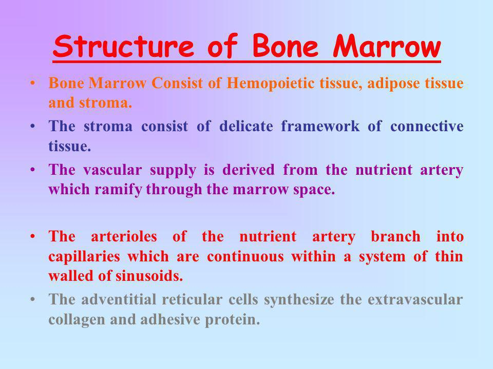 Structure of Bone Marrow