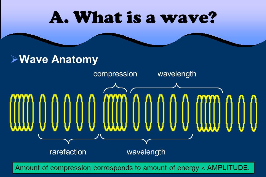 A. What is a wave Wave Anatomy compression wavelength rarefaction