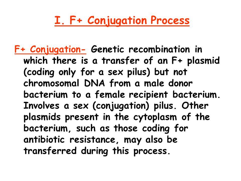 I. F+ Conjugation Process