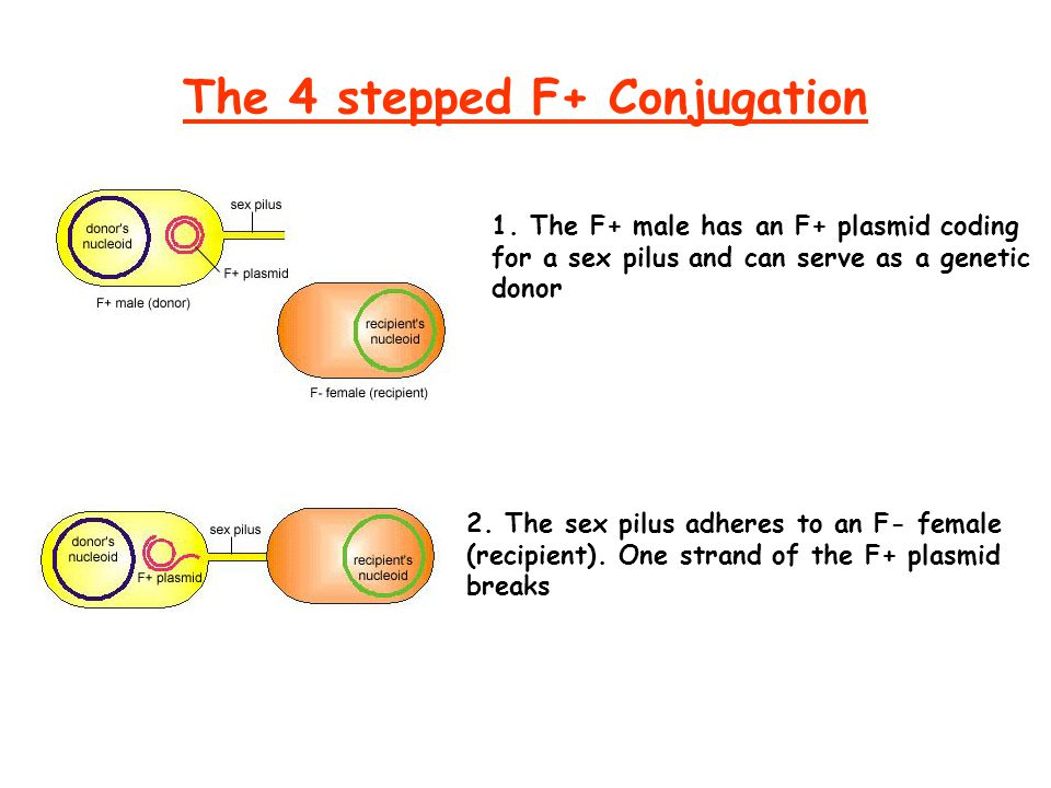 The 4 stepped F+ Conjugation