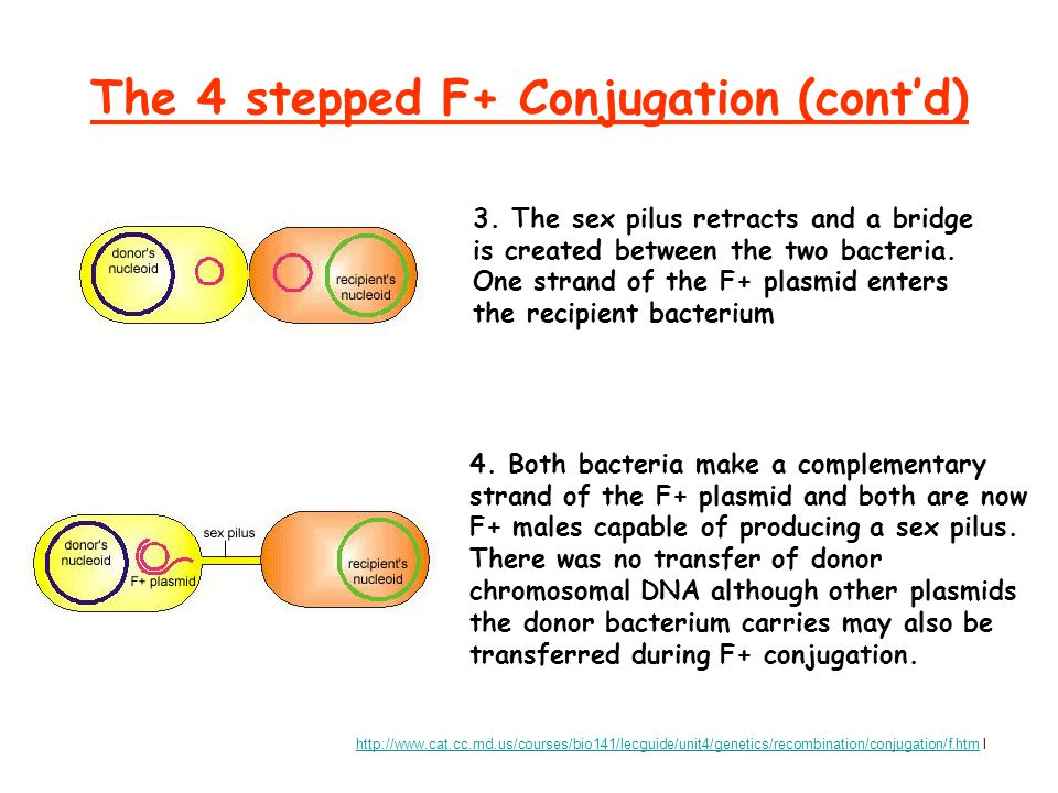 The 4 stepped F+ Conjugation (cont'd)