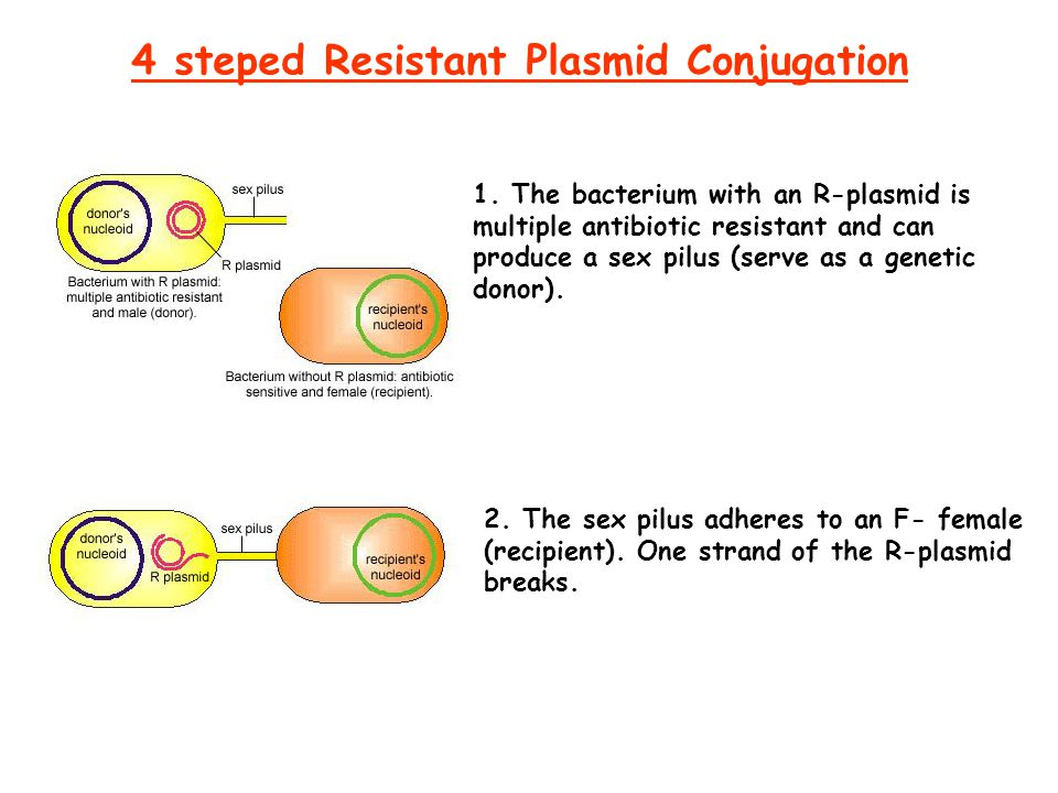 4 steped Resistant Plasmid Conjugation