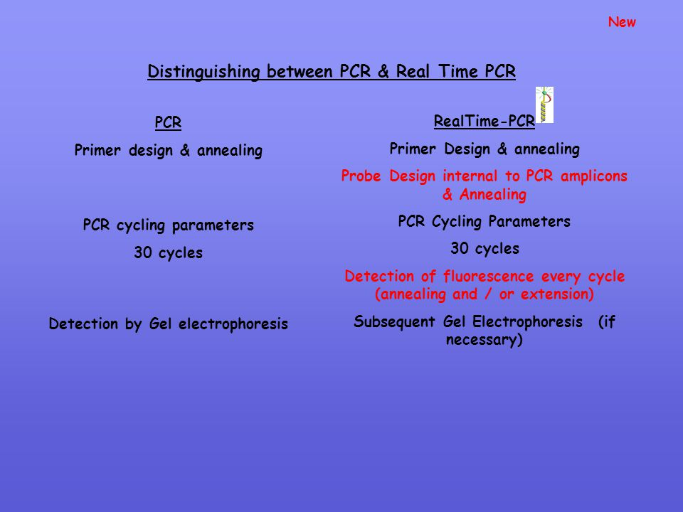 Distinguishing between PCR & Real Time PCR