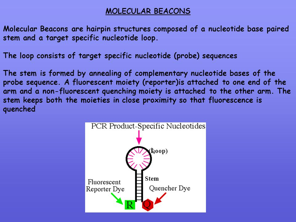 The loop consists of target specific nucleotide (probe) sequences