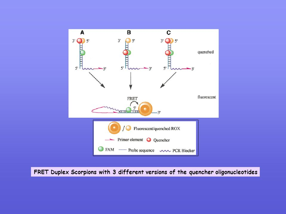 FRET Duplex Scorpions with 3 different versions of the quencher oligonucleotides