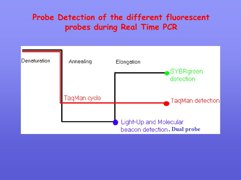 Probe Detection of the different fluorescent probes during Real Time PCR
