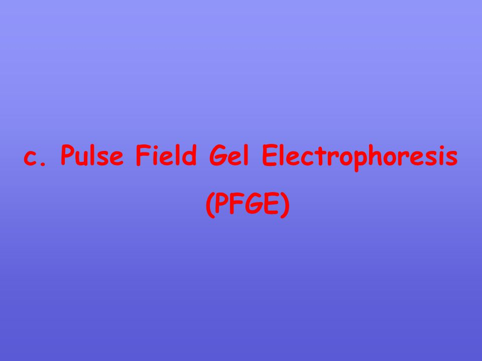 c. Pulse Field Gel Electrophoresis