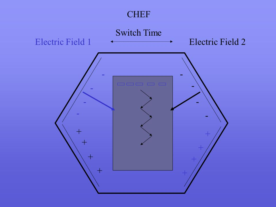 CHEF Switch Time Electric Field 1 Electric Field 2 - - - - - - - - + + + + + + + +