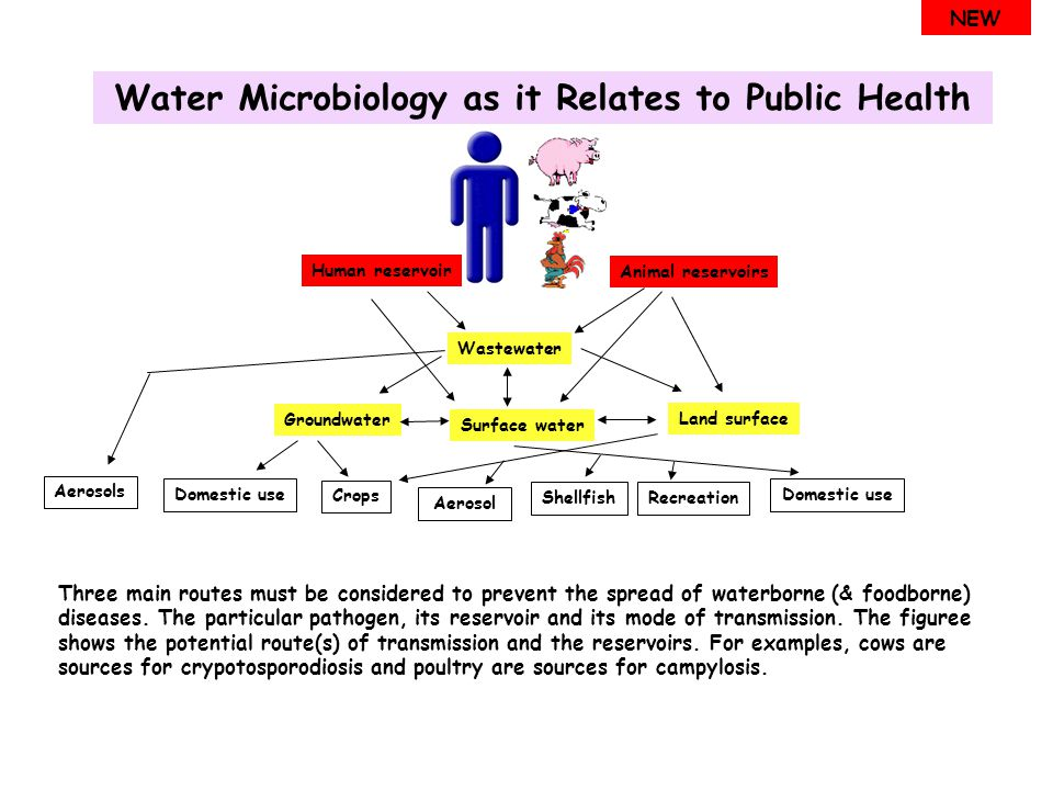Water Microbiology as it Relates to Public Health