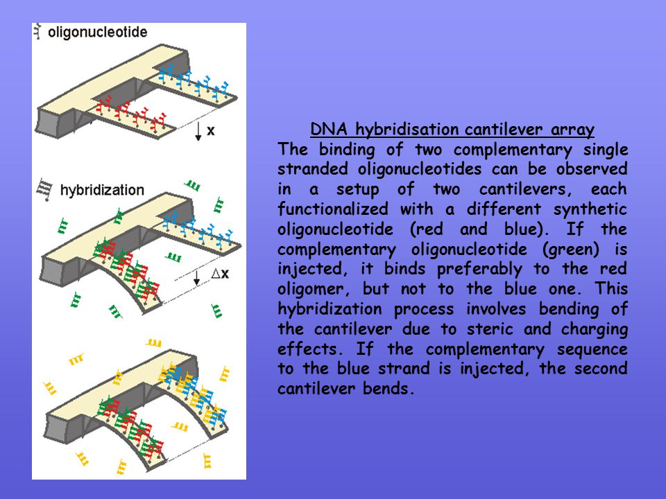 DNA hybridisation cantilever array