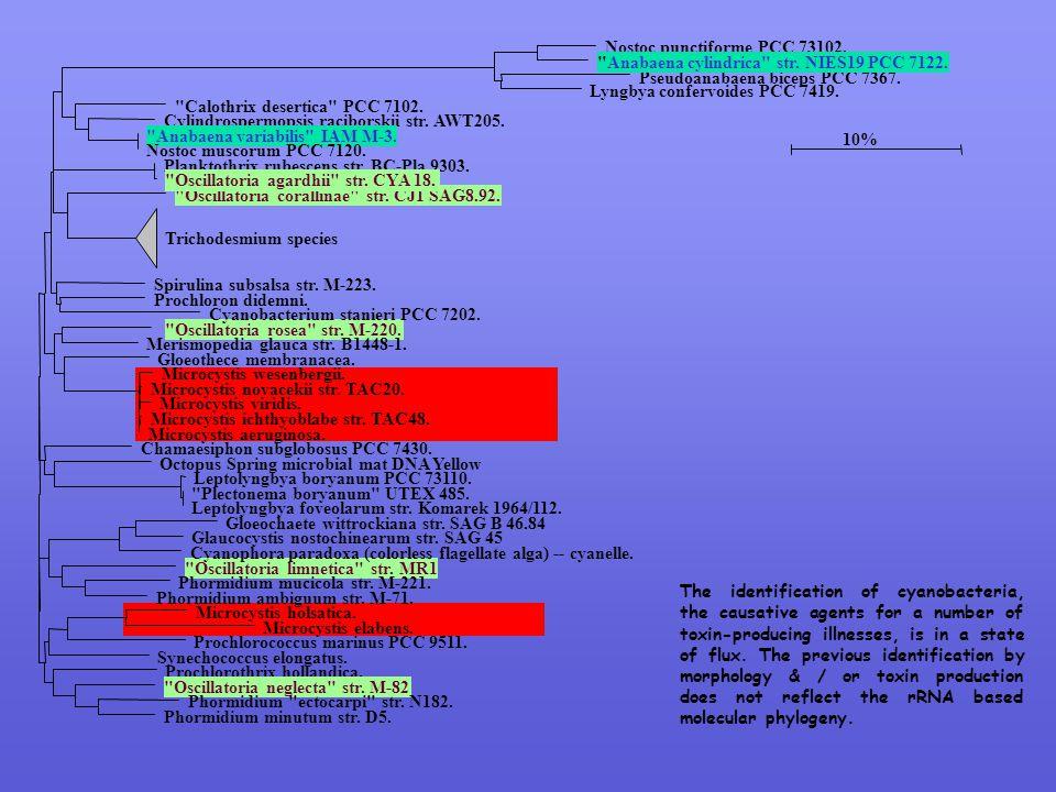 Nostoc punctiforme PCC 73102.