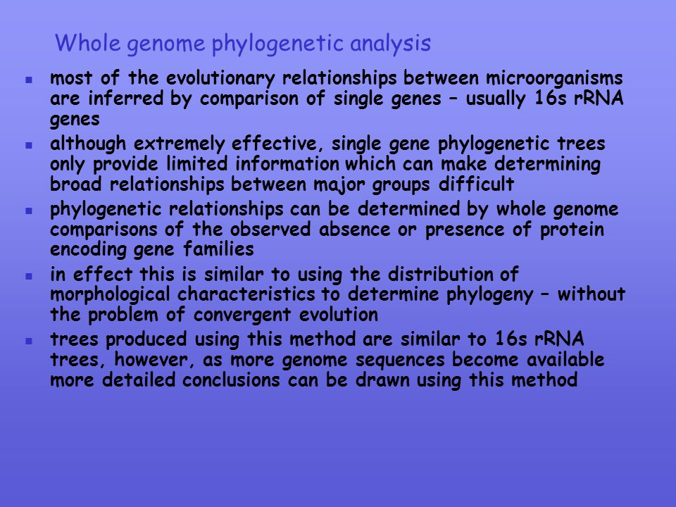 Whole genome phylogenetic analysis
