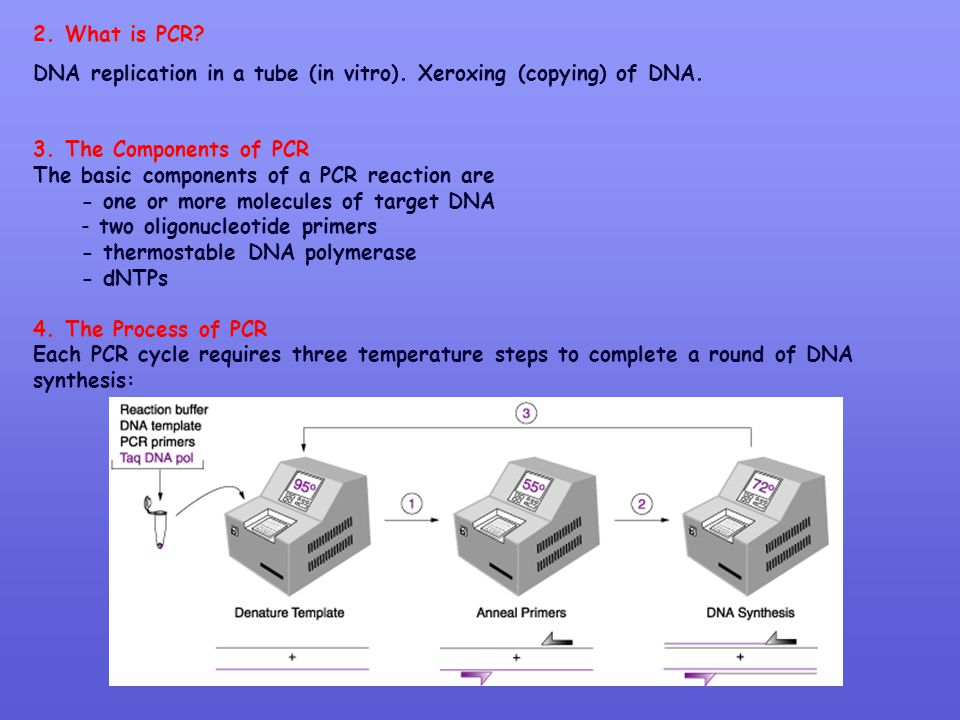 2. What is PCR DNA replication in a tube (in vitro). Xeroxing (copying) of DNA. 3. The Components of PCR.