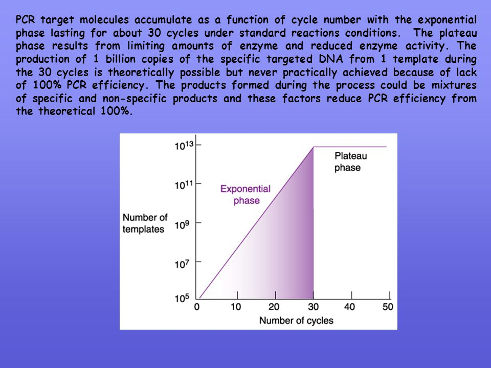 PCR target molecules accumulate as a function of cycle number with the exponential phase lasting for about 30 cycles under standard reactions conditions.
