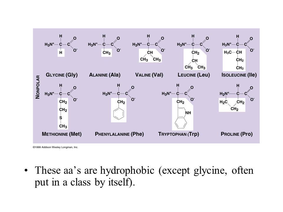These aa's are hydrophobic (except glycine, often put in a class by itself).