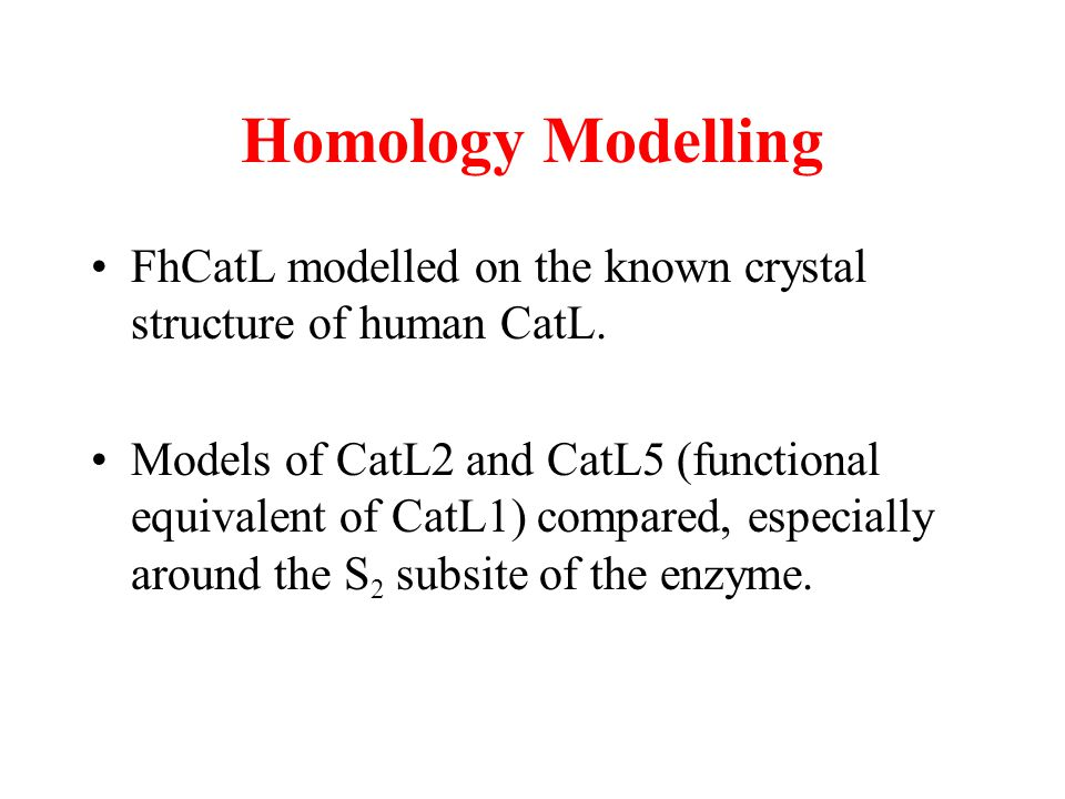 Homology Modelling FhCatL modelled on the known crystal structure of human CatL.