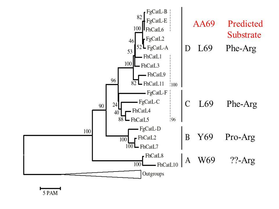 AA69 Predicted Substrate L69 Phe-Arg L69 Phe-Arg Y69 Pro-Arg W69 -Arg