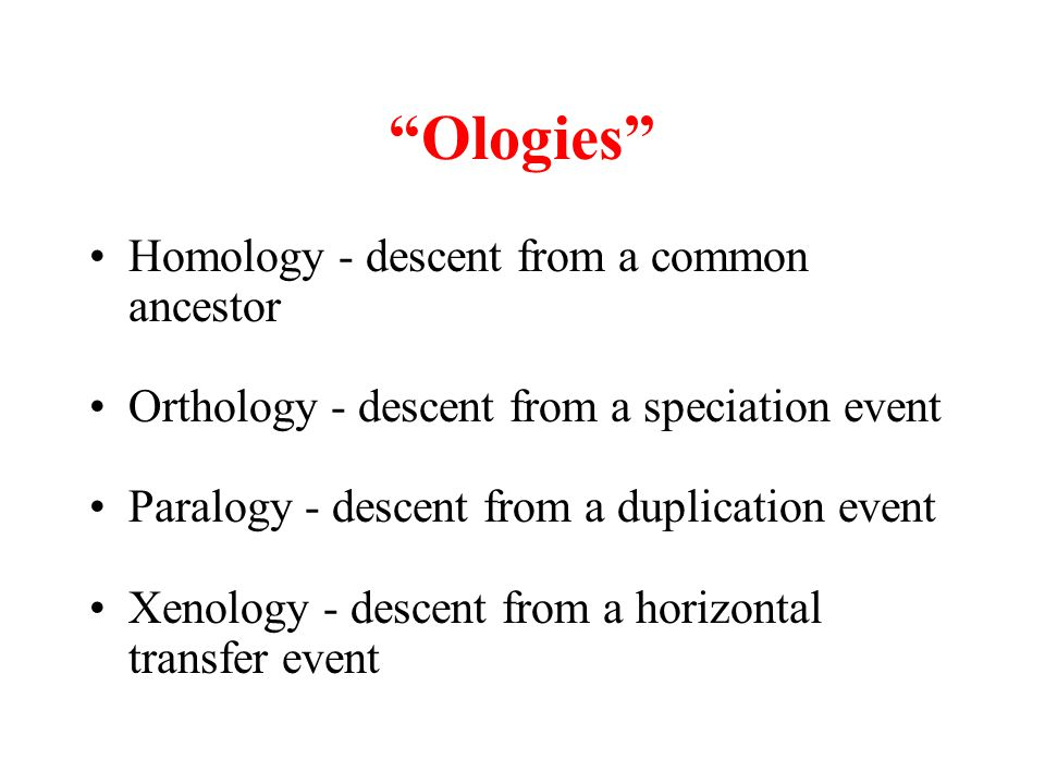 Ologies Homology - descent from a common ancestor