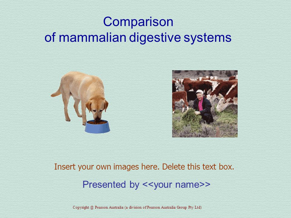 Comparison of mammalian digestive systems