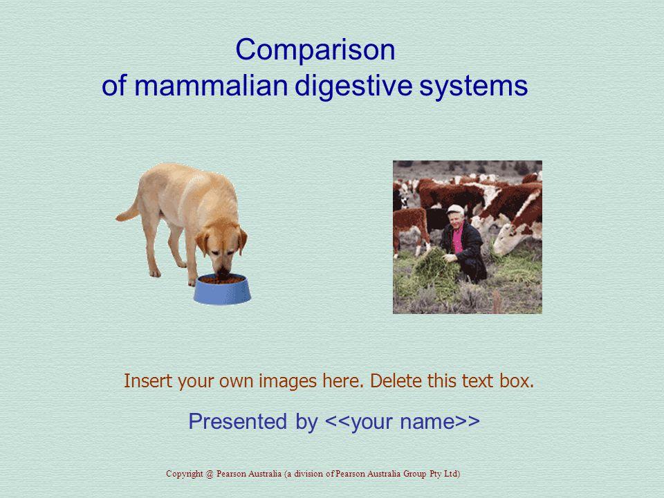 Comparison of mammalian digestive systems