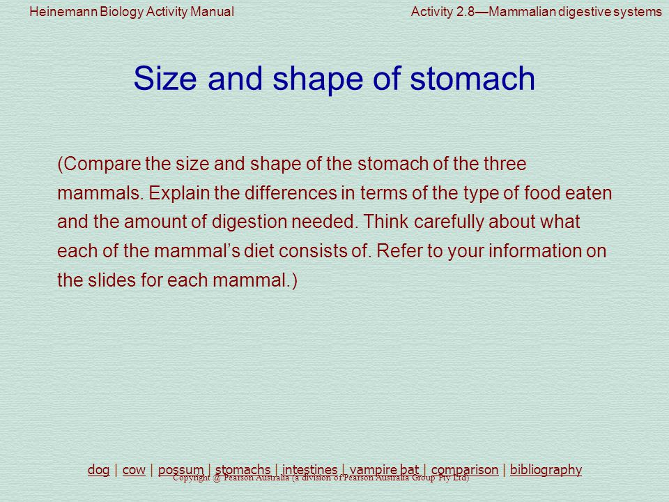 Size and shape of stomach