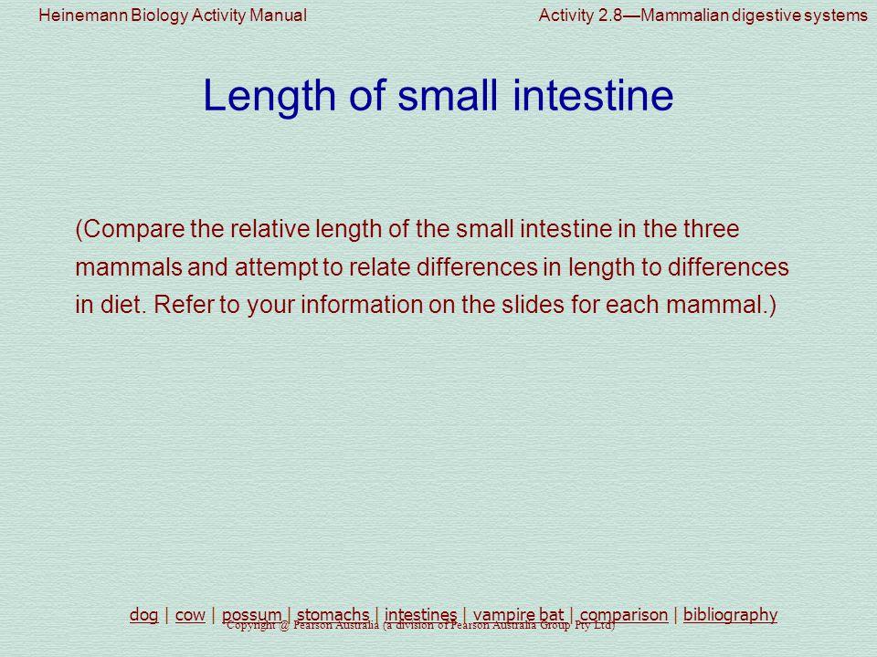 Length of small intestine