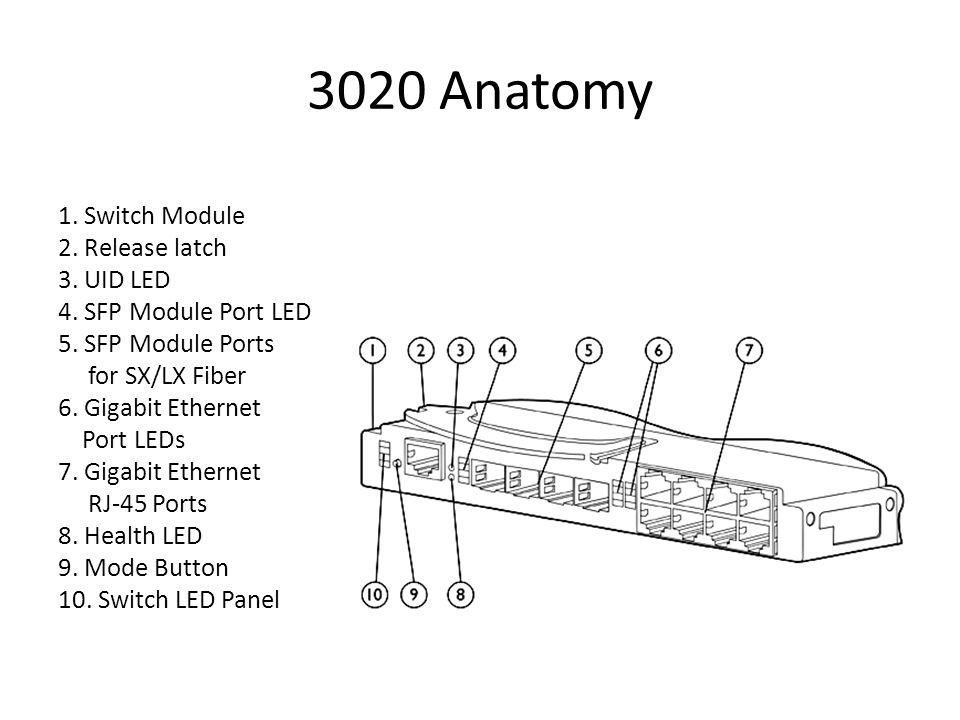 3020 Anatomy