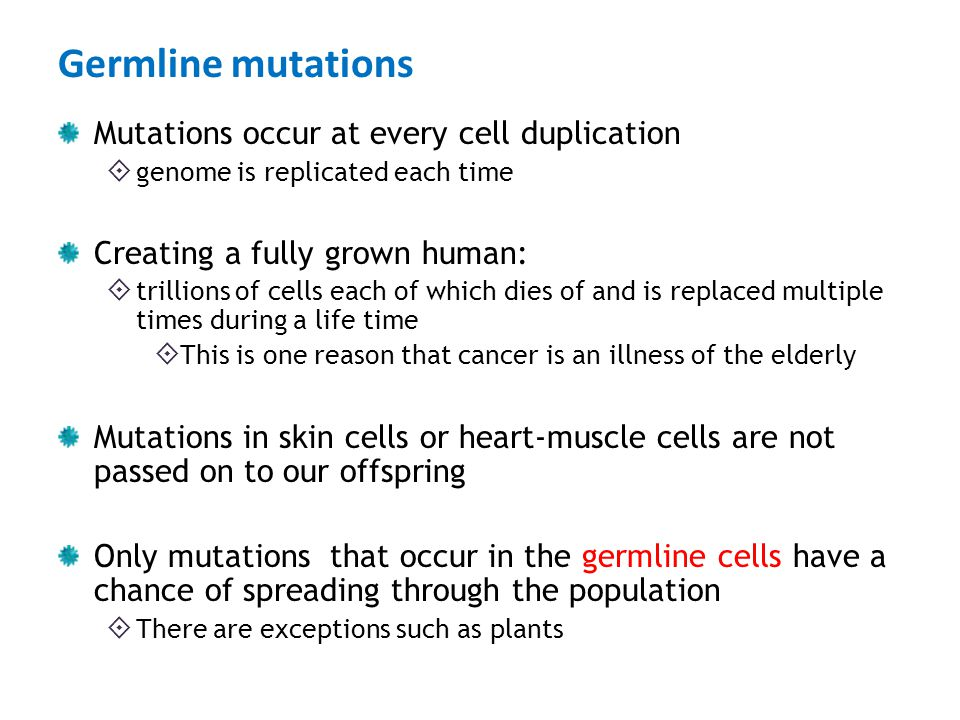 Germline mutations Mutations occur at every cell duplication